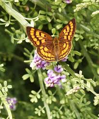 native plants new zealand new zealand copper butterfly take a picture save the planet