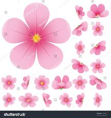 cherry blossom flowers cherry blossom flowers set pink stock vector 72599101