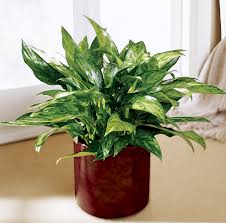 Best Indoor Plants Low Light by 12 Houseplants That Can Survive Even The Darkest Corner
