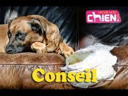 comment empecher chien de monter sur le canapé comment apprendre à mon chien à ne plus être destructeur