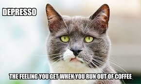 Depressed Cat Meme - every weekday morning lolcats lol cat memes funny cats