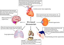 Tissue Renewal Regeneration And Repair Emerging Roles Of Hyaluronic Acid Bioscaffolds In Tissue