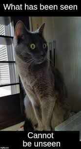 best of gray cat what has been seen can t be unseen meme generator