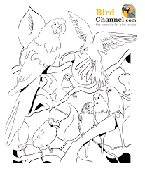 multiple parrot coloring pages art art journaling