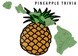 pineapple 14 fun facts about hawaiian pineapples origin history pizza