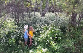 native ginger plant landscape design for biodiversity education and restoration
