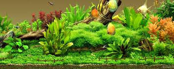 Tropical Fish Home Decor Glass Fish Tanks Tropical Tank Wallpaper Loversiq