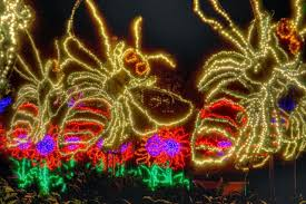light show in atlanta atlanta botanical gardens transformed into winter wonderland gac
