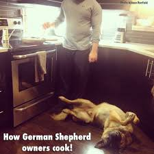 Dog Cooking Meme - yep i have to step over my dog while cooking love it german