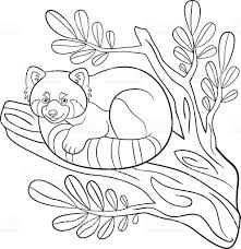 coloring pages little cute red panda on the tree branch stock