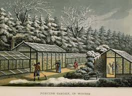 Greenhouse Floor Plans by Painting Of Vintage Greenhouses Used For Forcing Garden In Winter