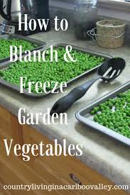 how to blanch u0026 freeze garden vegetables easy u0026 fast enjoy the