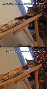 fun cat pictures funny cat pictures