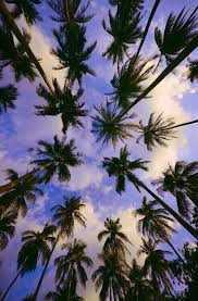 palm tree sky pictures photos and images for