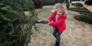 19 farms where you can cut your christmas tree