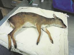 sle resume journalist position in kzn wildlife ezemvelo accommodation wild animals are not pets news24