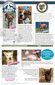 boxer dog rescue florida the wise issue by unleash jacksonville issuu