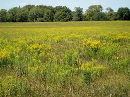 native iowa plants farming in iowa u2013 iowa landscapes change and continuity