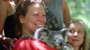 bungalow bay koala village north qld by grasshoppertravel com