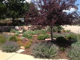 plants native to colorado faq heidrich u0027s colorado tree farm nursery