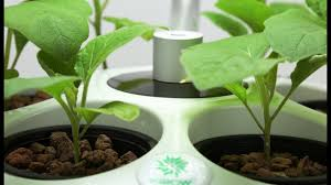indoor hydroponic garden kit youtube