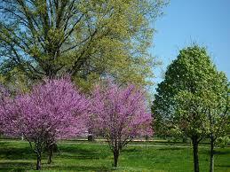 small garden trees uk cori matt garden