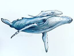 Whale Best 25 Whale Drawing Ideas On Pinterest Whale Illustration