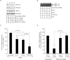 Flag Tag Dna Sequence Regulated Erlin Dependent Release Of The B12 Transmembrane J