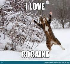 Cat Cocaine Meme - catch that ball of cocaine by danaking meme center