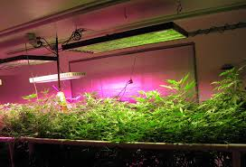 grow lights for indoor herb garden diy indoor herbs garden ideas
