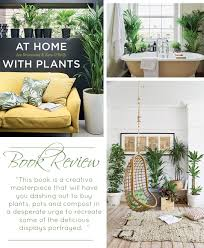 Home Interior Plants The Definitive Guide To House Plants