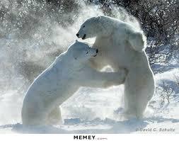 Funny Bear Memes - bear memes funny bear pictures memey com