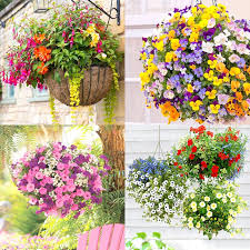hanging flowers how to plant beautiful flower hanging baskets 20 best hanging