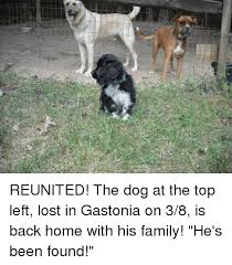 Lost Dog Meme - reunited the dog at the top left lost in gastonia on 38 is back