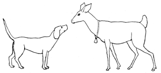 deer dog coloring free printable coloring pages