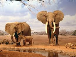 an elephant family hd wallpaper