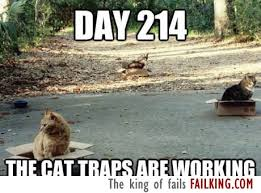 Working Cat Meme - the cat traps are working failking com