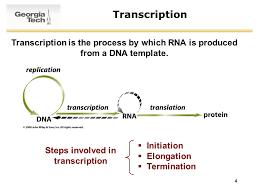 1 survey of biochemistry transcription and translation ppt download