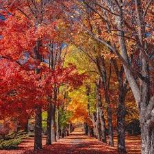 fall autumn autumn quotes and sayings the essence of quotations