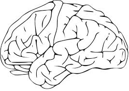 Coloring Page Brain Img 16581 Brain Coloring Page