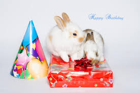 funny happy birthday card with rabbits stock photo image 59128450