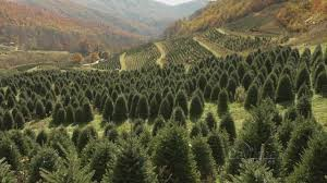 david pittman u0027s christmas tree farm youtube
