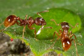 What Are The Red Bugs On Concrete by To Stay Alive Ants Dump Their Dead