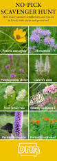 illinois native plant society 24 best native iowa plants images on pinterest native plants