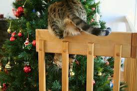 how to cat proof your tree apartment therapy