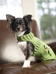 crochet pattern for dog coat ravelry dapper doggie sweater by sharon mann a a pinterest
