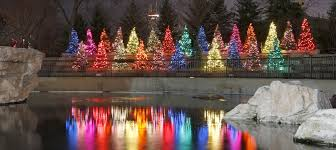 national zoo christmas lights winter guide to chicago zoolights macy s millenium park more