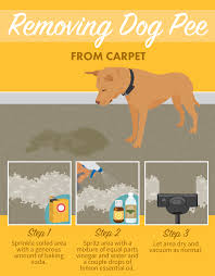flooring best wood floors for dogs way toean urine from