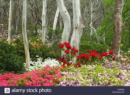 eucalyptus trees surrounded by blooming spring flowers in campbell