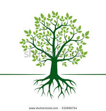 tree roots stock images royalty free images vectors